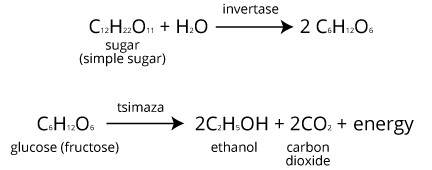 fermentation lab with glucose sucrose and starch If these enzymes are present they can digest starch and provide the sugars for yeast fermentation starch exists in must first digest sucrose into glucose and.